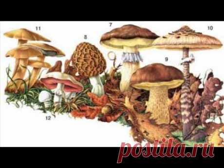 Съедобные и ядовитые грибы России: мифы и реальность (рассказывает миколог Михаил Вишневский)
