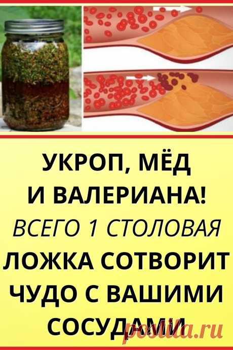 Укроп, мёд и валериана! Всего 1 столовая ложка сотворит чудо с вашими сосудами