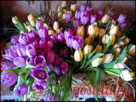 Так хочется тюльпанов в январе! Каких-нибудь особенно красивых, Как облако на утренней заре – Не гордых роз, не хризантем спесивых, Не ландышей, не крокусов цветных, А именно тюльпанов: лёгких, хрупких, Хранящих нежность тёплых рук твоих; Воздушных, как девчонки в летних юбках… Так хочется домой их принести, Поставить в вазу, сесть и любоваться, И вспоминать твой шёпот: «Не грусти…», И молча своим мыслям улыбаться...!
