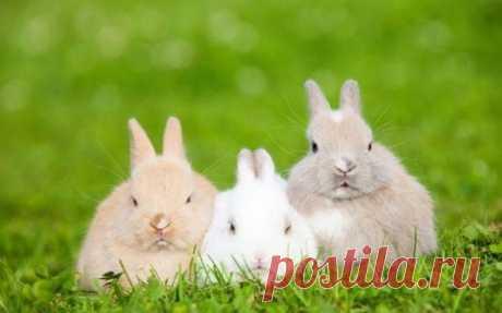 Музей кроликов и ещё 12 необычных музеев со всего мира / Туристический спутник