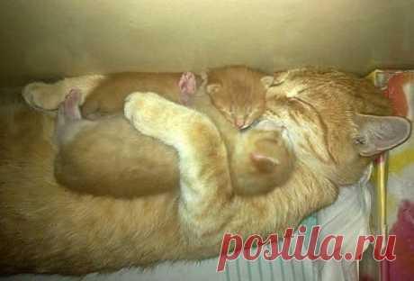 Нежная материнская любовь