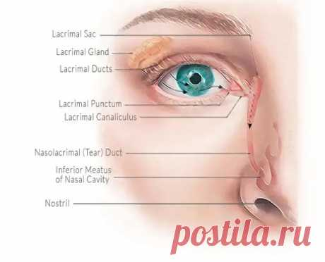 """Как сохранить здоровье глаз на долгие годы.... - Познавательный сайт ,,1000 мелочей"""" - медиаплатформа МирТесен"""