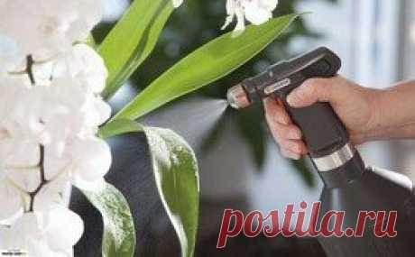 Лучший совет , чтобы не сохли кончики листьев у комнатных растений. | Блог садовода | Яндекс Дзен