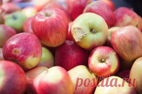 Поздние яблоки, которые я советую посадить. Самые вкусные сорта