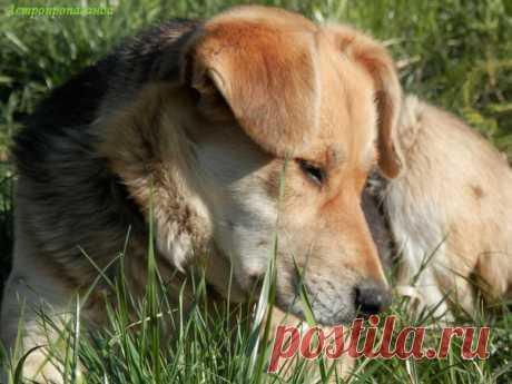 Если вам приснилась собака | Астропропаганда | Яндекс Дзен Автор статьи: астролог Нина Стрелкова. Собака – хозяйка 2018 года. В восточном гороскопе Собака характеризуется как беспокойная, тревожная, бдительная и очень внимательная ко всему, в том числе к знакам судьбы, указывающим на будущее. В год Собаки многим будут сниться предсказательные сны. Может присниться и собака, ведь из всех животных собаки людям снятся чаще всего...