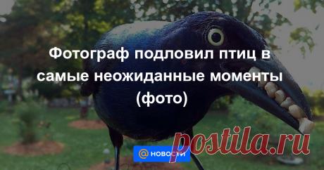 Фотограф подловил птиц в самые неожиданные моменты (фото) Секрет прост — фотоловушка возле кормушки.