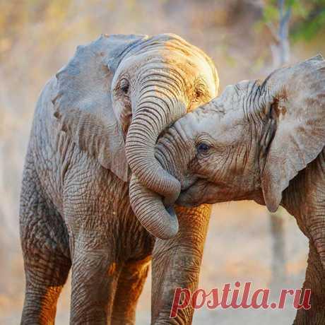 Влюбленные звери: самые милые и трогательные фотоснимки со всего мира