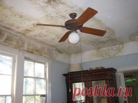 Заметили плесень на стене в квартире – что делать и как победить опасный грибок
