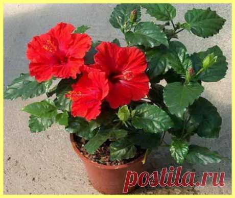 Как ухаживать за комнатными цветами | sadok33.ru