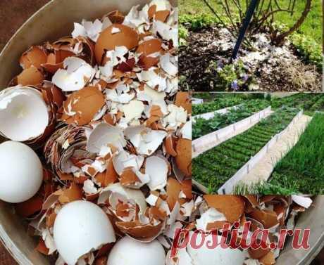 Почему нужно обязательно собирать скорлупу для сада? (Без заморочек) | Есть время под солнцем | Яндекс Дзен