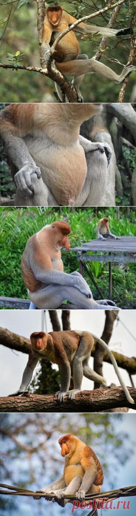Смотреть изображения носачей | Зооляндия