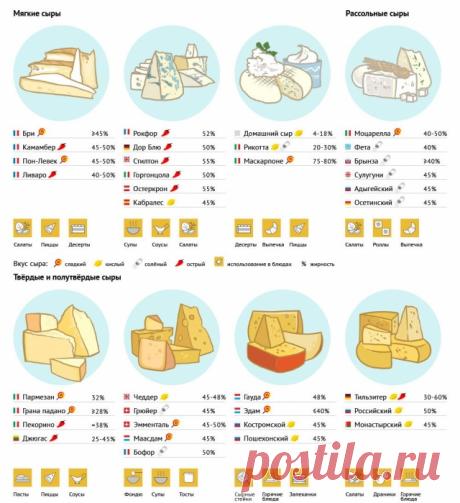 Виды сыра и их использование в кулинарии — Полезные советы