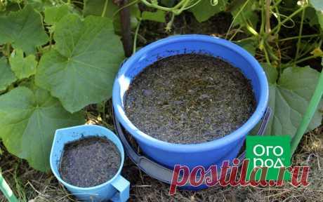 Ферментированный чай – чудо-подкормка для огорода | Дела огородные (Огород.ru)