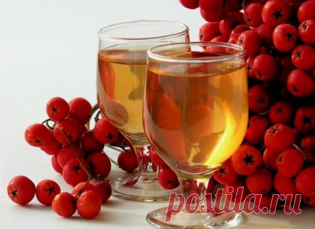 El vino del serbal en las condiciones de casa la receta simple