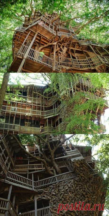 Самый большой в мире дом на дереве имеет площадь 930 квадратных метров и опирается на 6 деревьев…