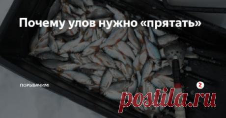 Почему улов нужно «прятать» Только новички выкладывают рыбу на показ...