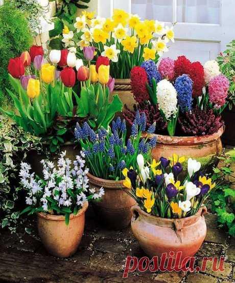ՊՈԵԶԻԱՆ ԳԱՐՈՒՆ Է, ՍԵՐ Է🌾 «Ծաղիկներ, սեր, գարուն....»-Ձեզ՝Արարչի կերտած կախարդական բնաշխարհի ողջ ներկապնակի գուներանգներով: Գարունը այնքան ծաղիկ է վառել, Գարունը այնպես պայծառ է կրկին, Ուզում եմ մեկին քնքշորեն սիրել, Ուզում եմ մեկին քնքուշ խոսք ասել:  Գարունն ու մայրը երկվորյակներ են  Գարունը զանգն է կյանքի, զարթոնքի, Մայրը՝ զանգահարը գարնան թովչանքի: Գարունը կյանք է մոր կյանքով լեցուն, Գարունը սեր է մոր սիրով լցված, Գարունը հույս է՝ մոր սիրով հարատևող, Գարունը գալիքի խորհրդանիշն է