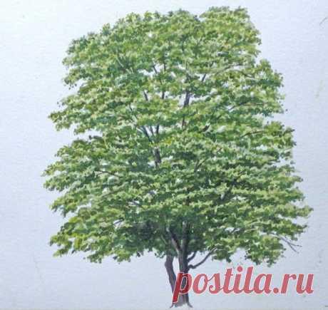 Как нарисовать дерево акварелью — Сделай сам, идеи для творчества - DIY Ideas