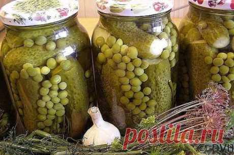 Набор для оливье из зеленого горошка и огурцов (Пошаговый рецепт) Ингредиенты: На 1 литровую банку: Огурцы в расчете на литровую банку;горошек в эту же литровую банку. Маринад: вода — 350 грамм; соль — 1 столовая ложка;сахар — 2 столовые ложки;уксус 9% — 1 столовая ложка;чеснок -2 зубка;зонтик укропа;специи по вкусу. Пошаговый рецепт огурцы с горошком на зиму Зеленый горошек отварите в воде 15-20 минут.Огурцы замочите на 3-4 часа в холодной воде, затем хорошо промойте.Уложите огурцы и горошек