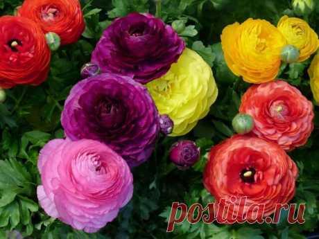 Цветы -это лучи красоты, которые способны затмить все богатства мира.