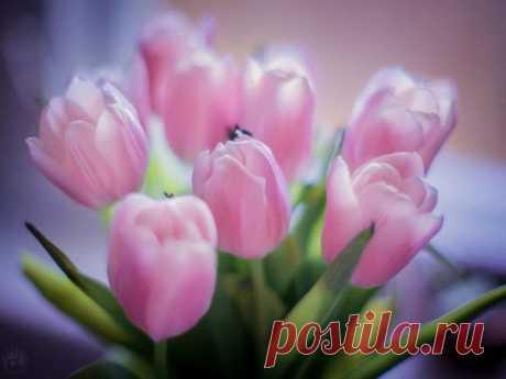 Что в сердце нераскрытого тюльпана?В чeм чудо красоты его, в чeм тайна?Так хочется поверить… посмотри -Прелестная Дюймовочка внутри…))))