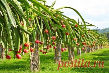 15 плодов, которые мы едим, но не знаем, как они растут — Ботаничка.ru