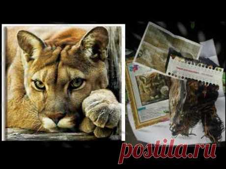 """Старт/Совместный отчет""""Мои любимые коты3""""/#вышивка"""