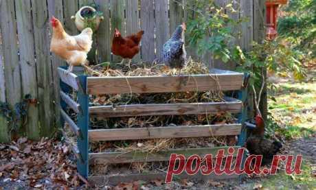 Удобряем куриным пометом деревья и кустарники   Уход за садом (Огород.ru)