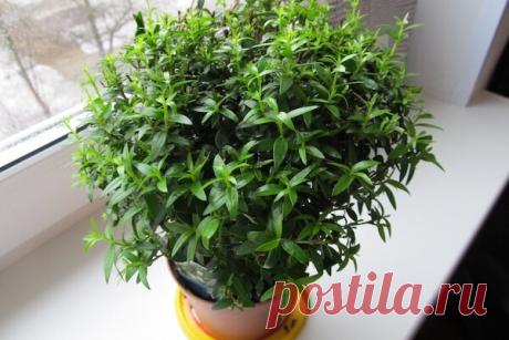 Самые ароматные комнатные растения: что посадить, чтобы квартира благоухала?