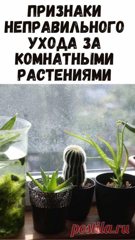 Признаки неправильного ухода за комнатными растениями.