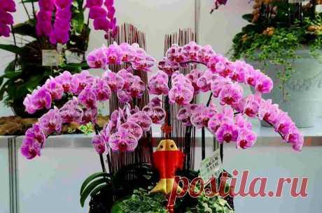 Уход за орхидеей фаленопсис. — Чудеса