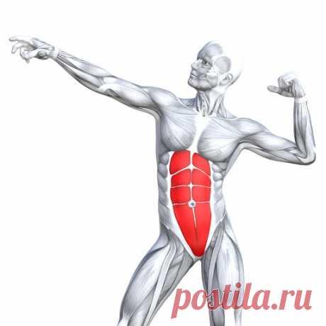5 упражнений для проработки мышц пресса Красивое тело мы формируем сами. Поэтому, чтобы иметь подтянутый и плоский живот, придется потрудиться. Эти пять несложных упражнений помогут проработать мускулатуру пресса. Для явного эффекта выполнять их следует регулярно.