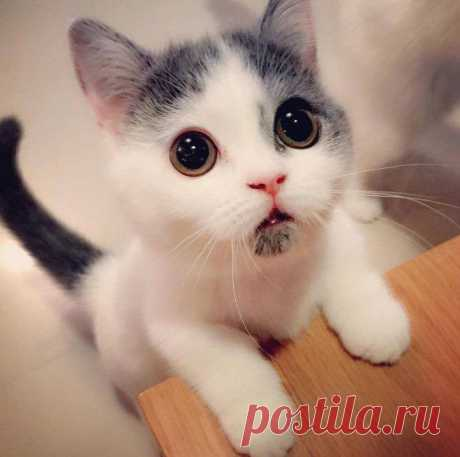 El gatito, que siempre es asombrado.   el Diablo toma