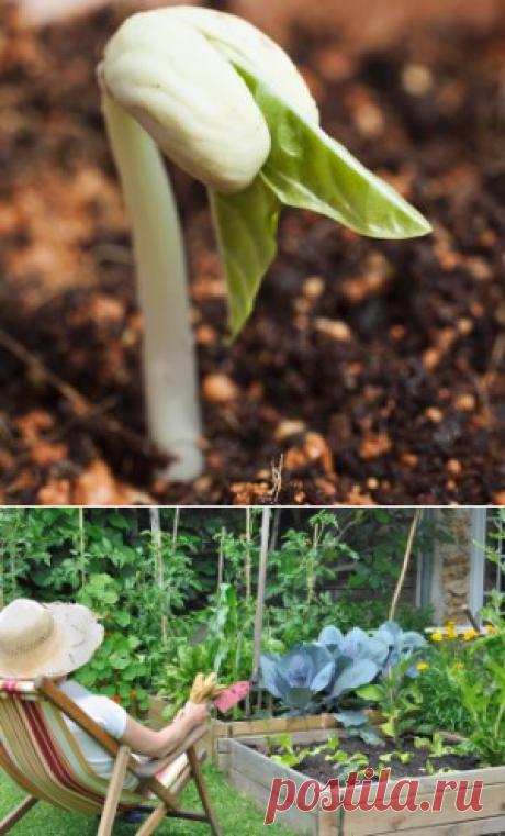 Как проверить всхожесть семян? | Огородник (Усадьба)