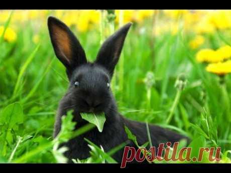 Травы которые можно давать кроликам. Часть #1