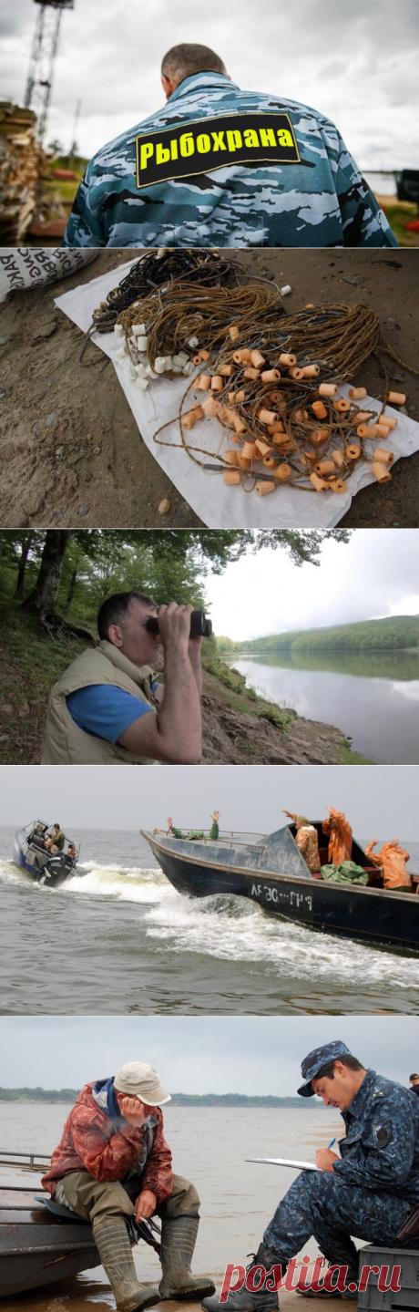 "Как нас с дедом рыб надзор ловил | ""Дневник охотника"" | Яндекс Дзен"