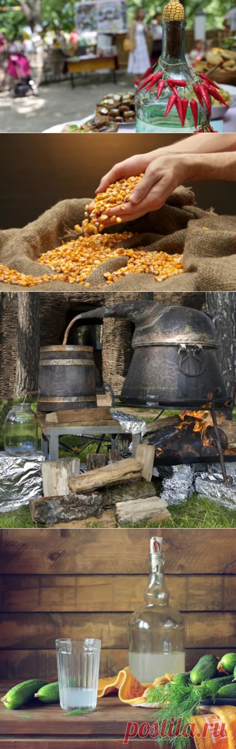 Царица полей – кукуруза. Что можно приготовить? Спирт! | Еда и кулинария