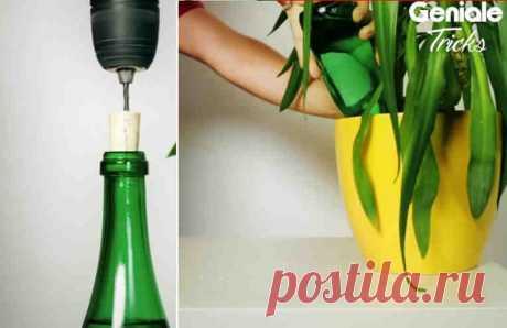 Теперь вам не придется просить соседей поливать цветы! Этот трюк сделает безмятежным ваш отпуск.