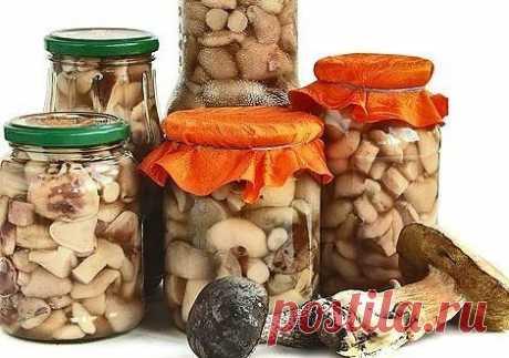 11 заготовок грибов на зиму Активное время готовки 25 мин. время на засолку