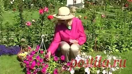 Как вырастить Петунию из семян на своём огороде