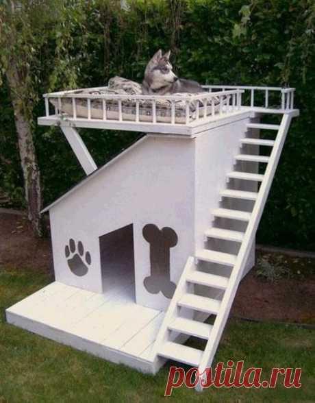 ТОП-15 необычных будок для любимых собак   Селовед — идеи дачи и огорода   Яндекс Дзен