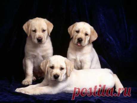 Pretty Puppies Free Screensaver | iFindSoft.com