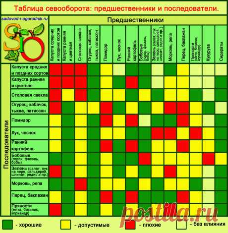 Crop rotation of vegetable cultures: the table, predecessors of vegetables, the organization of alternation at the dacha