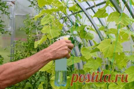 Борная кислота: применение в саду, огороде и цветнике | Удобрения и стимуляторы (Огород.ru)
