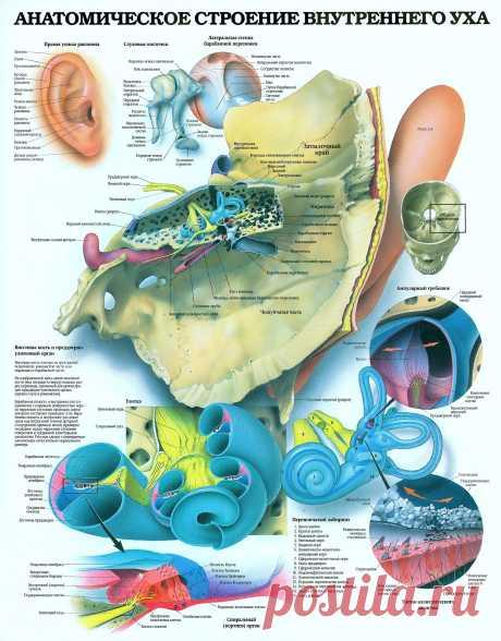 Анатомическое строение внутреннего уха