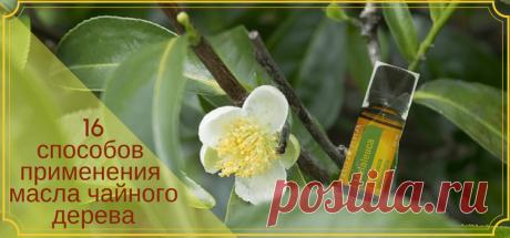 16 способов применения масла чайного дерева   Здоровье и красота от природы Масло чаного дерева - йод и зеленка в одном флаконе! Сколько интересных способов использования эфира чайного дерева. Пользуйтесь с удовольствием!