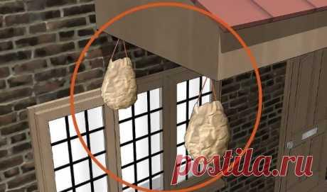 Как предотвратить появление осиных гнезд | GERADEZ | Яндекс Дзен