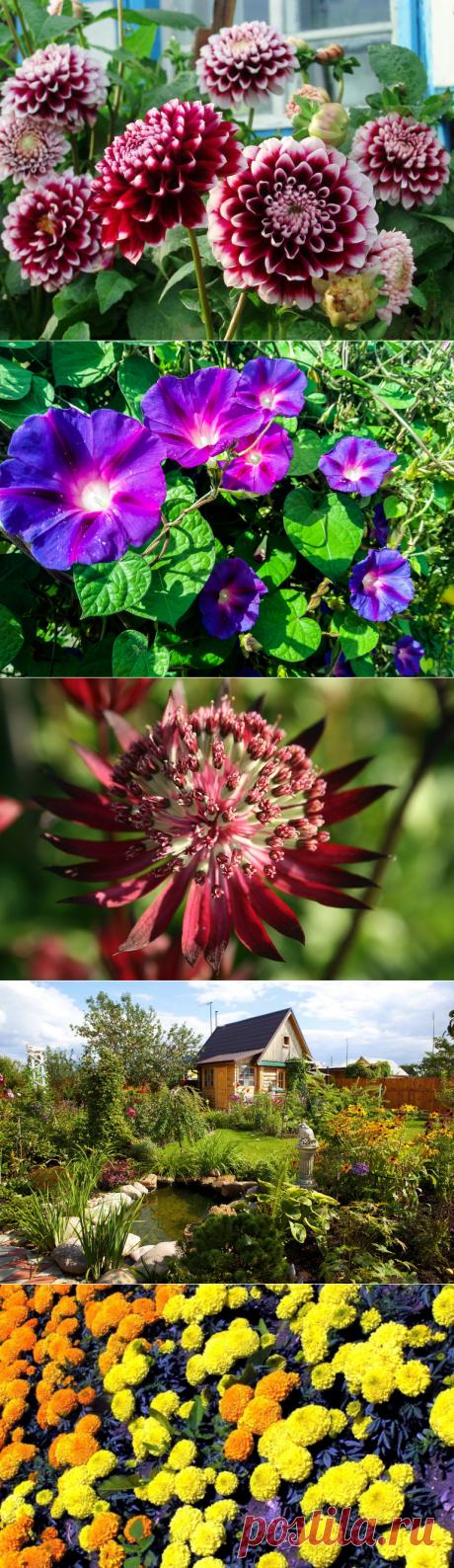 Что посадить на даче с минимумом ухода: варианты растений для красивого дизайна садовых участков