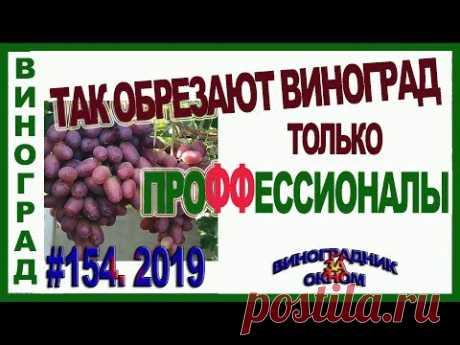 🍇 ТОЛЬКО 2 ВИНОГРАДАРЯ ИЗ 10 ТАК ОБРЕЗАЮТ ВИНОГРАД!!! Теория обрезки винограда на плодовое звено.