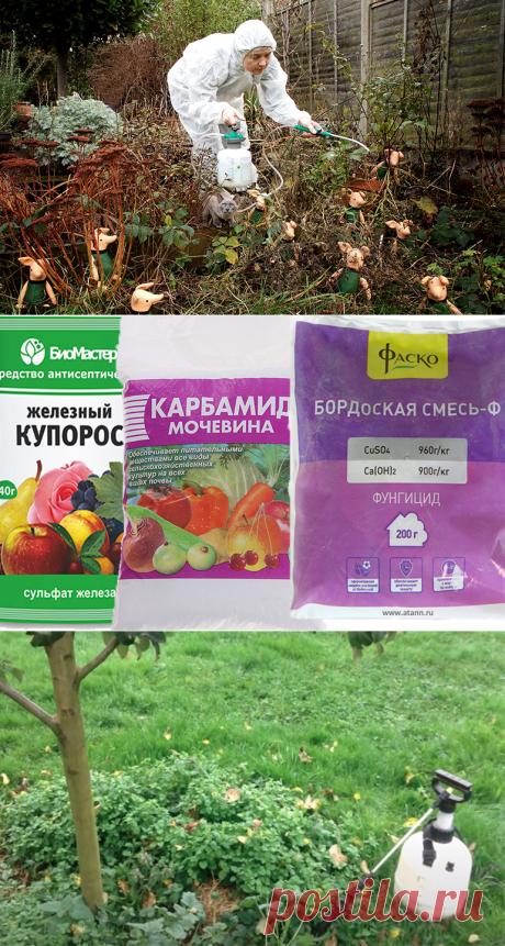 Обработка деревьев от вредителей осенью защитит будущий урожай.